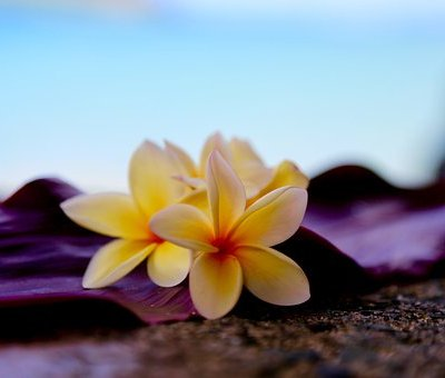 la huna nous accompagne tout au long de notre vie, elle s'adapte à nos besoins pour nous accompagner au mieux