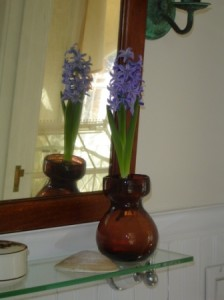 Hyacinth in glass forcer