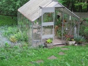 Greenhouse with Heuchera outside