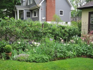 Other perennial bed