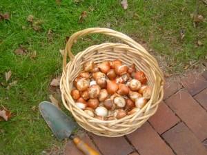 Bulbs awaiting