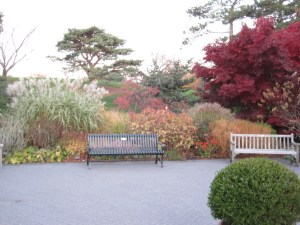 Glorious autumnal colors. At NYBG.