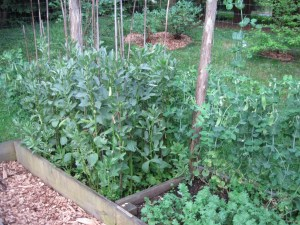 Raised beds in a potager