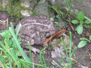 And the toads