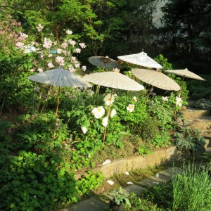 The ladies and their parasols