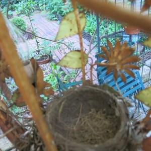 Empty nest!