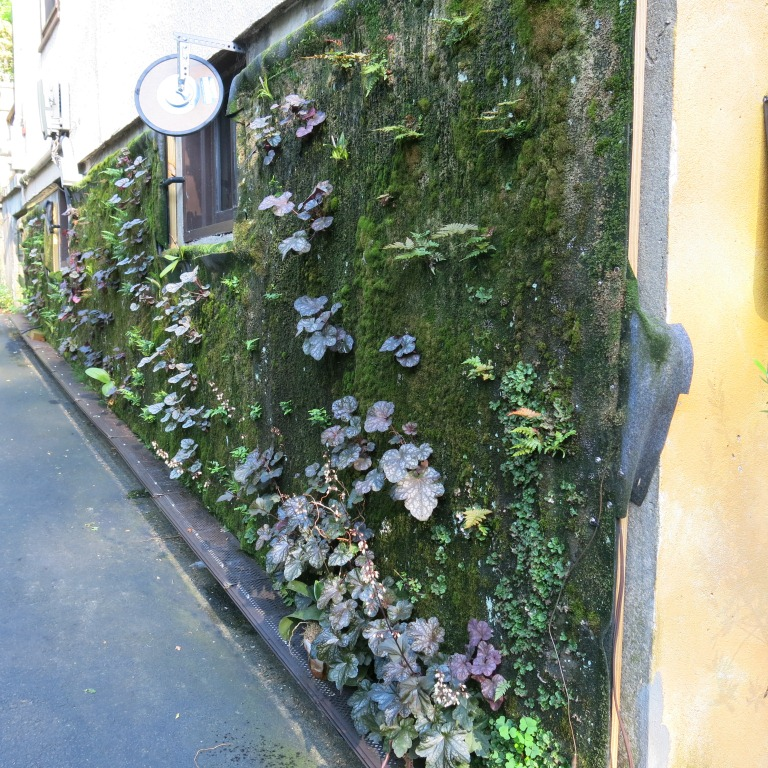 Vertical garden. June 2014