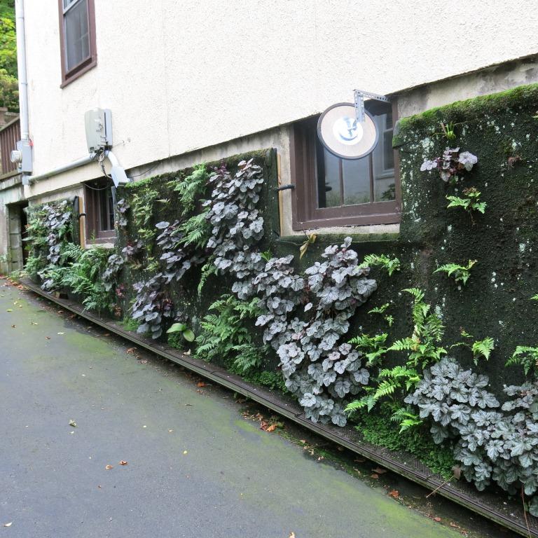 Vertical garden. September 2014