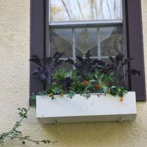 Autumn window-box