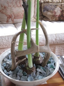 Antlers and seaglass hold up amaryllis
