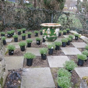 Setting up the planting pattern in the checkerboard garden