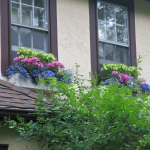 The window boxes