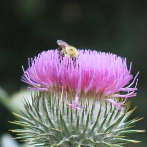 Pollination in progress