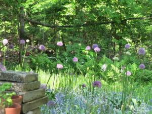 Alliums in the meadow