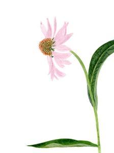 Watercolor-002