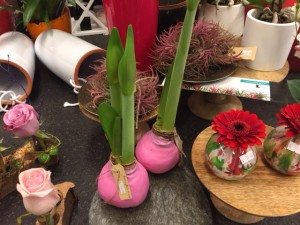 Bulbs dipped in hot pink wax. Just sitting there and preparing to bloom.