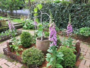 Foxgloves in force