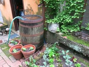The rain barrel