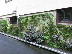 Wall garden right now
