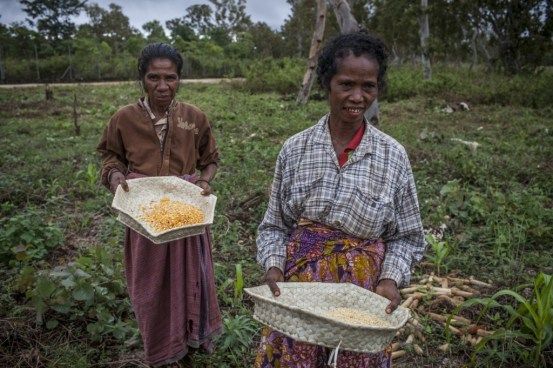 (Left) Maria Theresa Ximenes works at the research centre and also has her own crops at home where she grows corn and legumes.