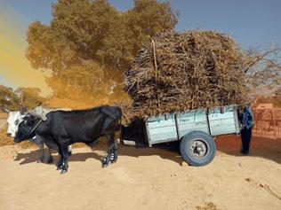bull-farm-home
