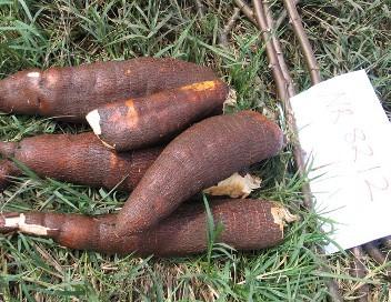 NR8212 | Cassava Seed Tracker