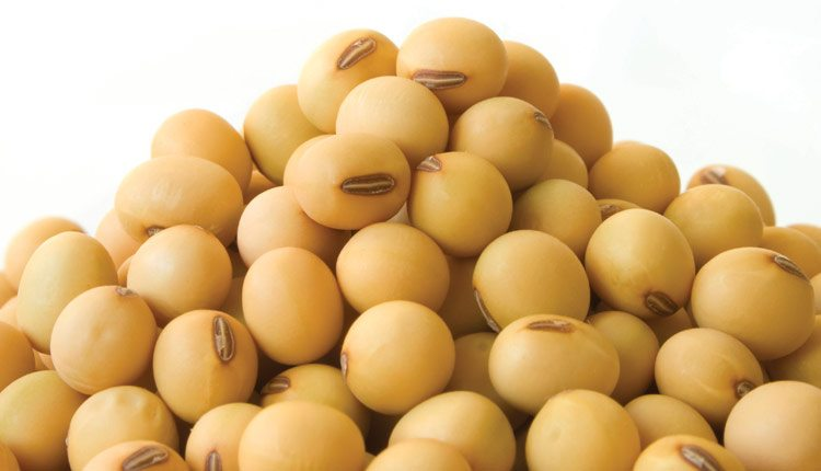 soybean-seeds