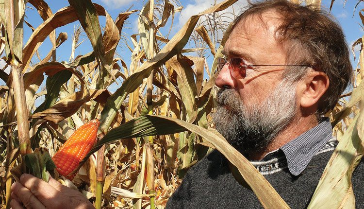 Purdue University agronomy professor Torbert Rocheford helped identify a set of genes that can be used to naturally boost the provitamin A content of corn kernels, a finding that could help combat vitamin A deficiency in developing countries. Photo: Purdue University