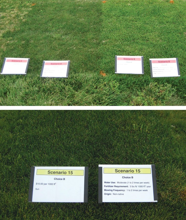 These two images show how participants were presented with a series of choice scenarios, which consisted of adjacent or nearly adjacent turfgrass plots. Participants were asked to take into account price, shade adaptation and requirements for irrigation, fertilizer and mowing.
