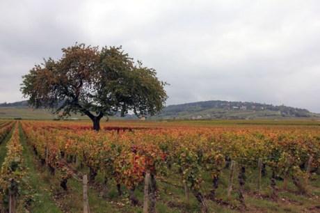 vineyard design travel