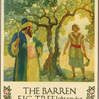 The Barren Fig Tree