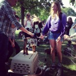 Petting zoo in the Plaza