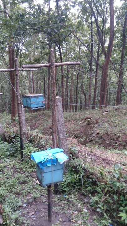 Beehive fence