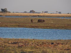 Looking out across the Chobe with a few hippos saying Hello. Botswana 2013