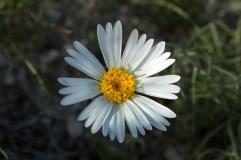 57fac-wildflowers2