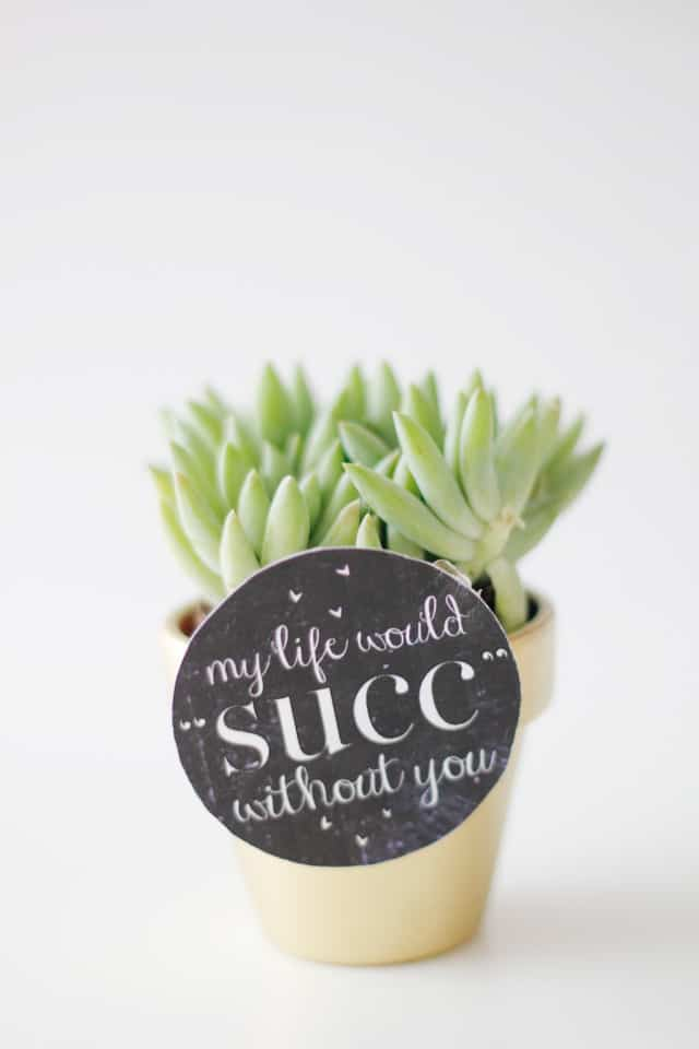 My Life Would SUCK Without You Succulent Valentine Idea