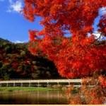 嵐山2017秋の紅葉のライトアップや見頃は?トロッコの見所も!