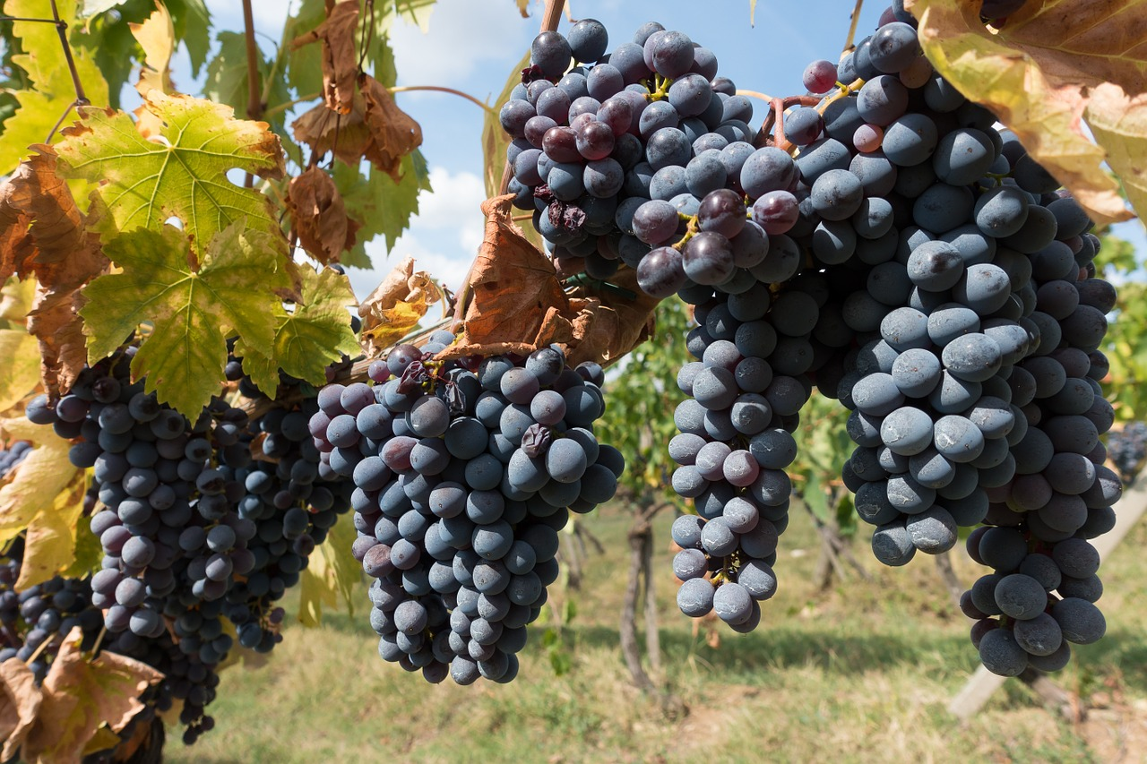 Visit wine regions in Spain during Autumn