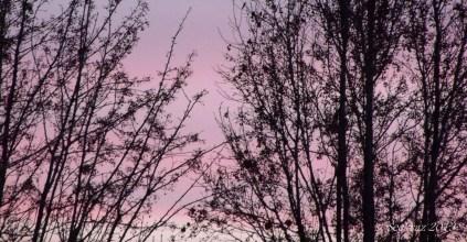 sunset trees 3