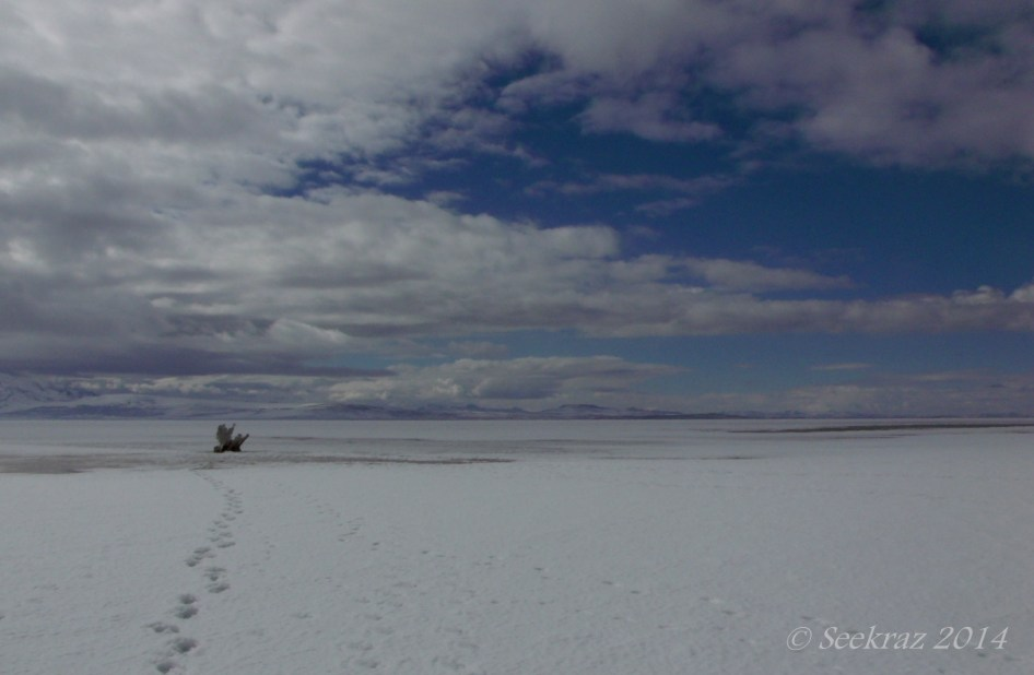 Antelope Island study in white 39
