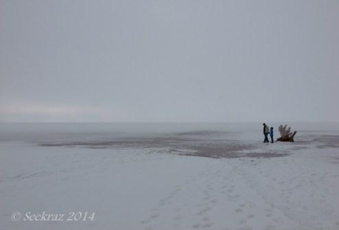 Antelope Island study in white 6