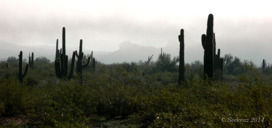 Mountain silhouette and saguaro cacti in cloudy desert