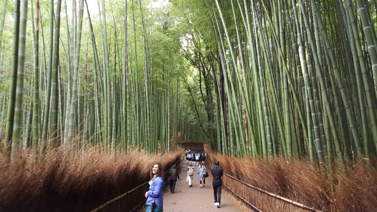 bamboo groves wide
