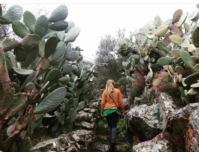 Wanderung Portugal Kaktushecke