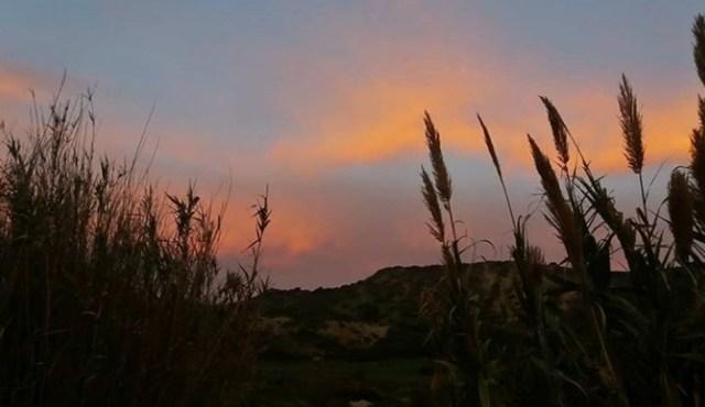 sonnenuntergang gräser rot orange