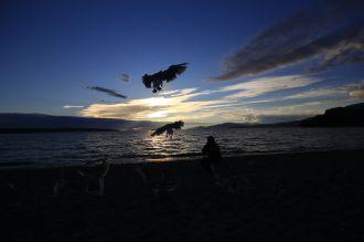 31 - Killer-Seagulls