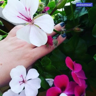 Verblühte Blumen auszupfen. #pmdd21 #balkonien #blumen #pflege #sommerhitze #bunt #geranien #blüte #sonntags