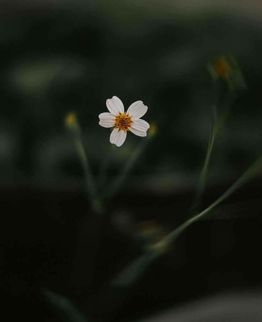 a photo of white flower in tilt shift lens