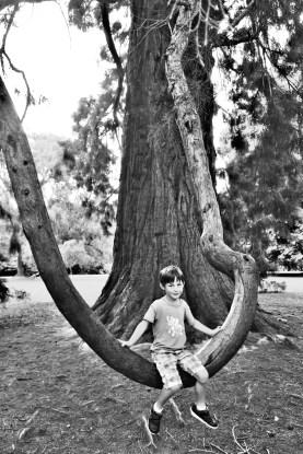 Kein Mammutbaum...
