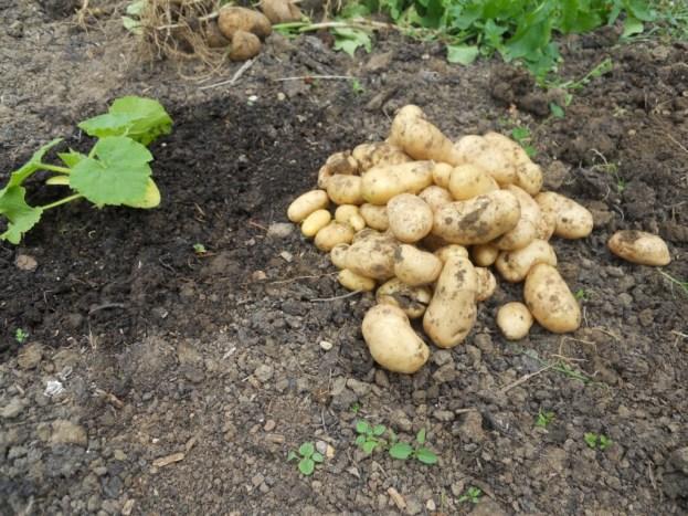 Bonus crop left in from last year